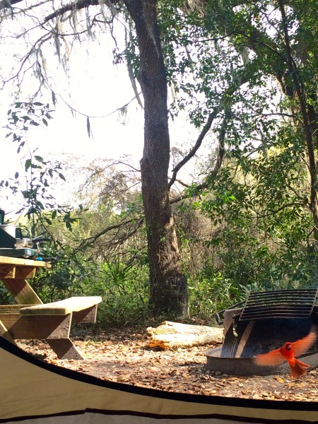 Fort Cooper Camping Neighbor