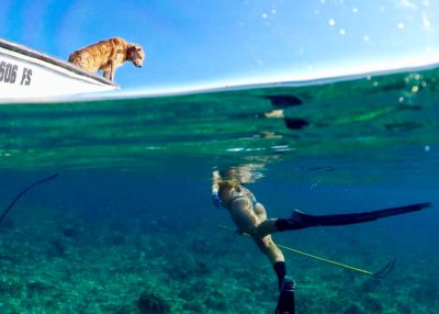 Spearfishing with a dog